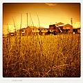 Noda Shinden, Mizuho, Gifu Prefecture 501-0232, Japan - panoramio.jpg