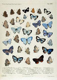 <i>Erysichton</i> Butterfly genus in family Lycaenidae
