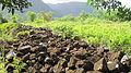 Oahu-Kawaewae-Heiau-wall-facing-Kahana.JPG
