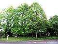 Oberhausen Pfalz Linden 2.jpg