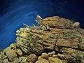 Oceanario Lisboa 2 (129843096).jpg