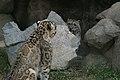 Oji zoo, Kobe, Japan (2813132401).jpg