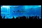 Okinawa Aquarium.jpg