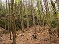 Oldřichovská vrchovina, sever, bučina 08.jpg