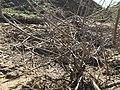 Old dirt mound and plants, WA, USA.jpg