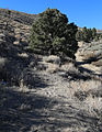 Old wagon Rd above 4x to Toms Place.jpg