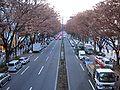 Omotesando Winter.jpg