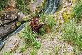 Orangutan at Woodland Park Zoo.jpg