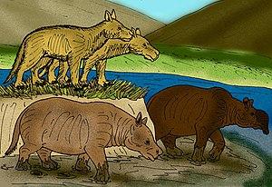 Merycoidodontoidea - Reconstructions of various Miocene oreodonts, including Merycochoerus, Promerycochoerus, and Brachycrus