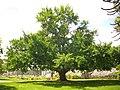Orléans - jardin des plantes (44).jpg