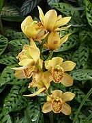 Orquídea-Medellin.jpg