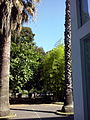 Orto botanico di Napoli 24.jpg