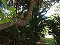 Pássaro colorido entre as folhas.jpg