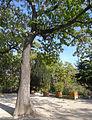P1280341 Paris IV square Barye arbre rwk.jpg
