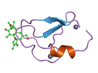 Phorbol - Example of phorbol bound to a domain of protein kinase C