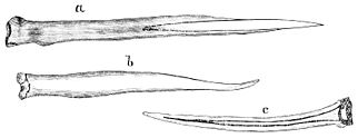 PSM V22 D466 Bone harpoon tips and sewing needles of the inuit.jpg