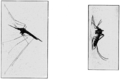 PSM V63 D464 Adult female mosquitos.png
