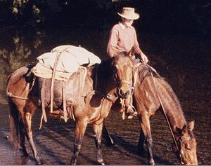 Pack animal - Horse packing with traditional Australian pack saddle