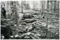 Pajarinen troops. Traces of the battle, the wolf Trench terrain.26.8. 1941. 1941.jpg