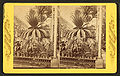 Palms at the Shaw's Garden, Mo, from Robert N. Dennis collection of stereoscopic views.jpg