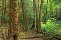 Palustrine Forest (2) (9000848705).jpg