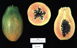 Genetically modified food - Image: Papaya sunset