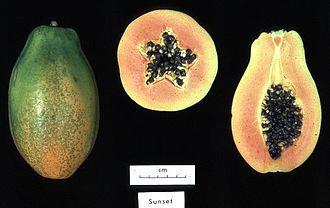Genetically modified food - Image: Papaya sunset