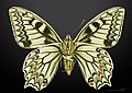 Papilio hospiton MHNT CUT 2013 3 10 Bigorno male Ventral.jpg