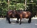 Parque nacional de Peneda-Gerês (36968472693).jpg