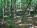 Path Company Mill Trail Umstead NC SP 0056 (3583764356).jpg