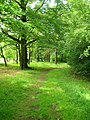 Path in Hagg Wood - geograph.org.uk - 1364629.jpg