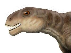 Chainosauria - Life restoration of Patranomodon nyaphulii