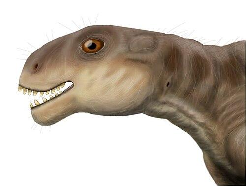 Patranomodon