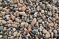 Pebbles (63814349).jpeg