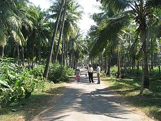 Pedapudi village in Andhra Pradesh, India