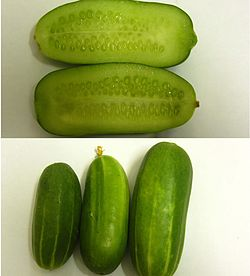 Persiancucumber.jpg