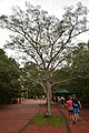 Perspektiven des Parque nacional Iguazú 1 (22103336182).jpg