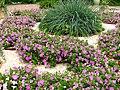 Petunia hybr. (in a flowerbed) 01.JPG