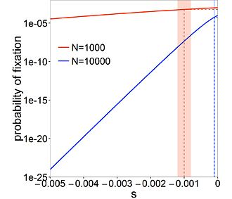 Nearly neutral theory of molecular evolution - The probability of fixation depends strongly on s for deleterious mutations (note the log scale on the y-axis) relative to the neutral case of s=0. Dashed lines  show the probability of fixation of a mutation with s=-1/N. Note that larger populations have more deleterious mutations (not illustrated).