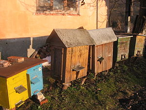 Beekeeping in Ukraine - Beehives in Ternopil Oblast, Ukraine