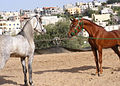 PikiWiki Israel 16572 Wildlife and Plants of Israel.jpg