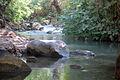 PikiWiki Israel 46544 Banias River.jpg