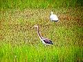 Pinckney Island National Wildlife Refuge (5958494018).jpg