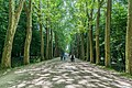 Plane tree alley in the park of the Castle of Chenonceau.jpg