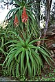 Plants-Sicily-bjs0701-03.jpg