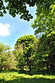 Plotytskyi-park-6986.jpg
