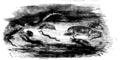 Podróże Gulliwera T. 1 str 305.png