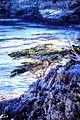 Point Lobos State Reserve, California, USA (8196260348).jpg