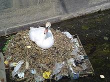 Pollution swan.jpg
