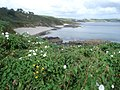 Porthbean Beach - geograph.org.uk - 561835.jpg